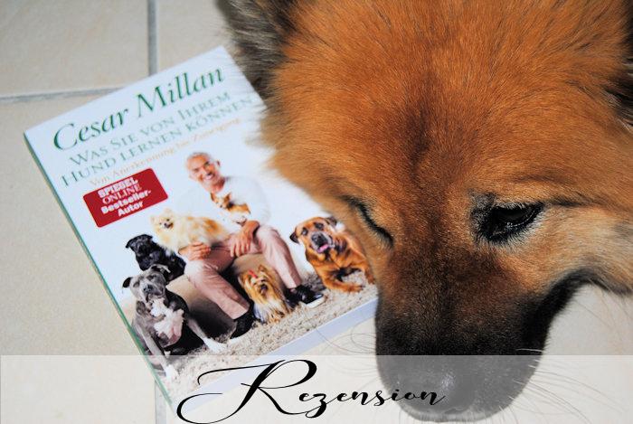 """""""Was Sie von Ihrem Hund lernen können – Von Anerkennung bis Zuneigung"""" von Cesar Millan"""
